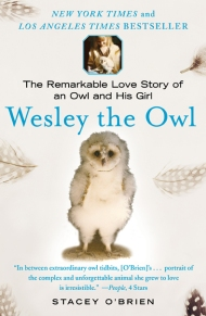 Wesley The Owl cover
