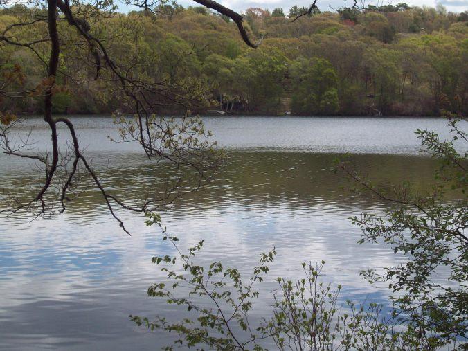 Shawme Pond
